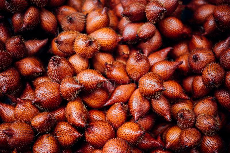 Salacca wallichiana is asia fruit at fruit market. Salacca wallichiana or zalacca is fruit have a pricker on skin in Thailand and asia fruit have a sweet can buy royalty free stock photo