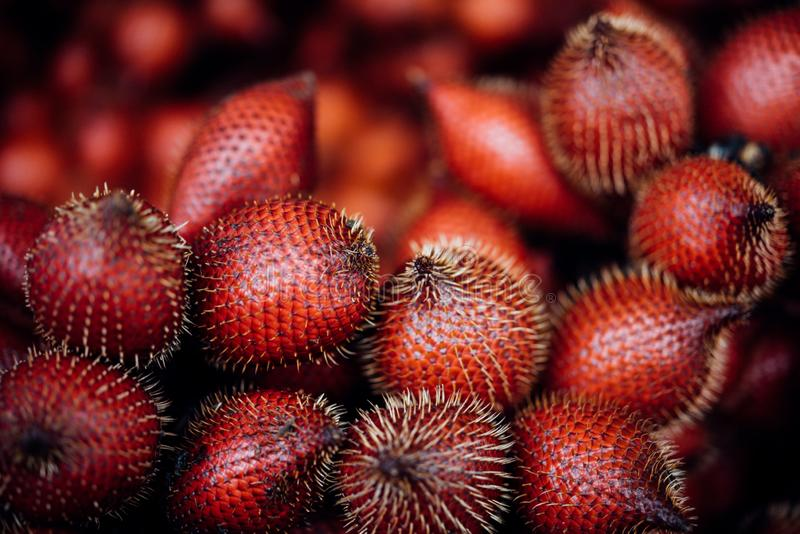 Salacca wallichiana is asia fruit at fruit market. Salacca wallichiana or zalacca is fruit have a pricker on skin in Thailand and asia fruit have a sweet can buy stock image