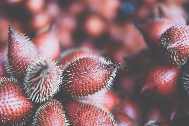 Salacca wallichiana is asia fruit at fruit market. Salacca wallichiana or zalacca is fruit have a pricker on skin in Thailand and asia fruit have a sweet can buy royalty free stock image