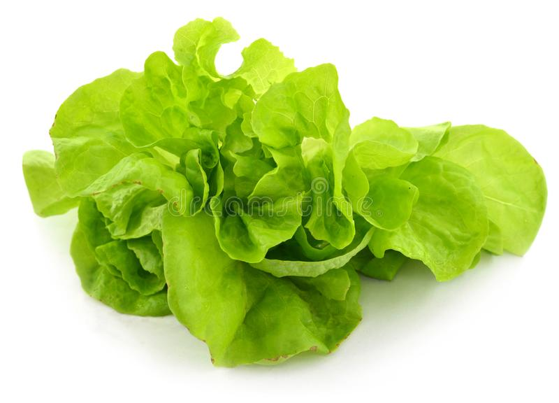Salad bunch on white stock image