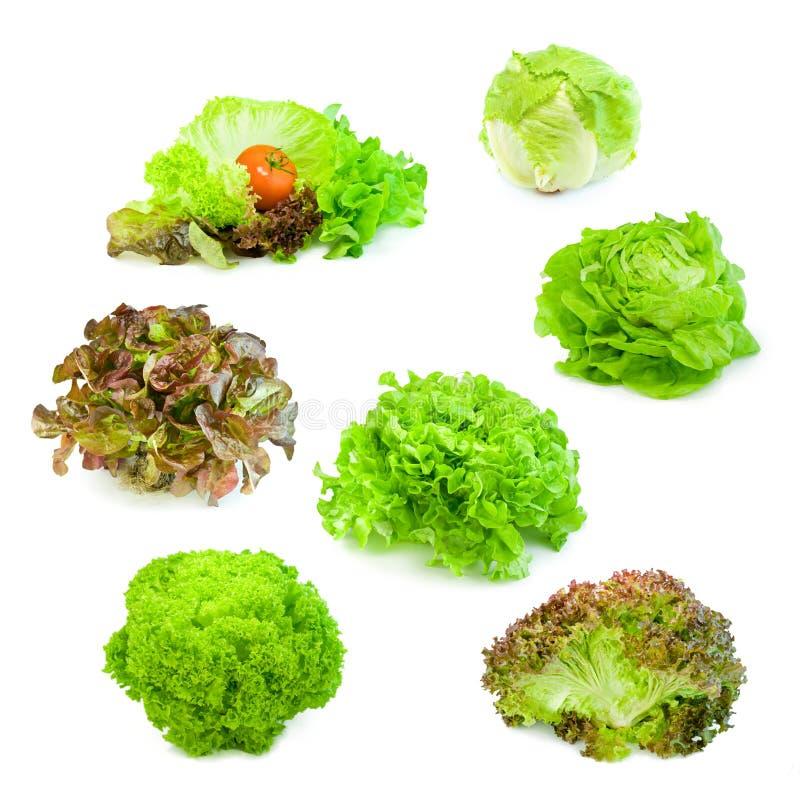 Free Salad Collection 01 Stock Photos - 11126313