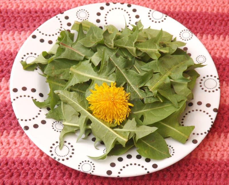 Salad of dandelion stock photography