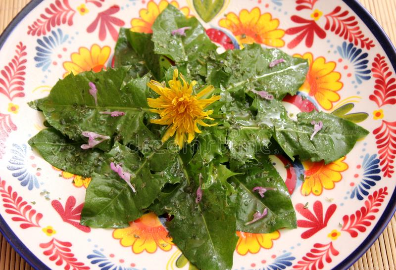 Salad of dandelion stock photo