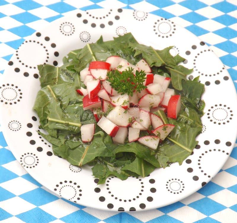 Salad of dandelion royalty free stock photo