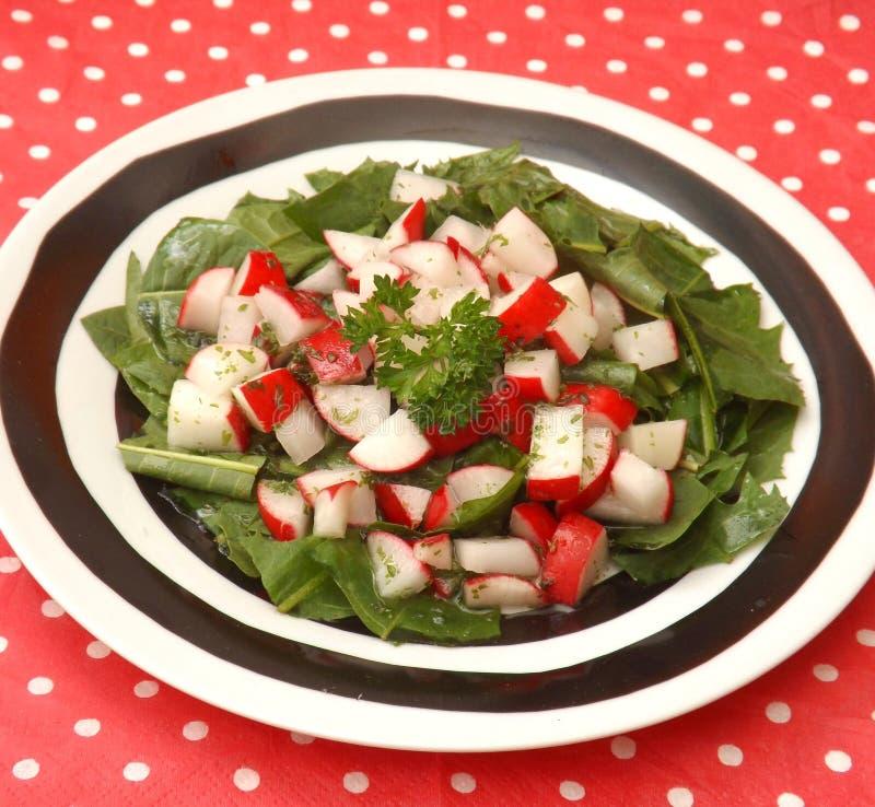 Salad of dandelion royalty free stock image