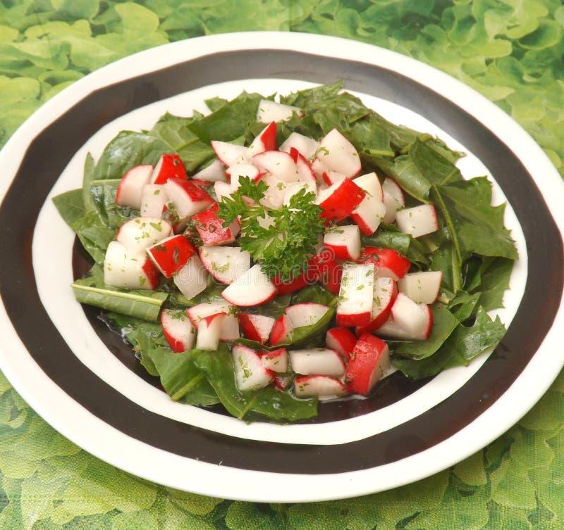 Salad of dandelion stock photo