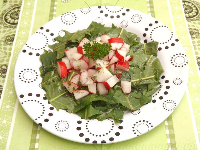 Salad of dandelion stock images