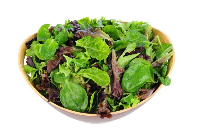 Salad Greens in Wood Bowl royalty free stock photos