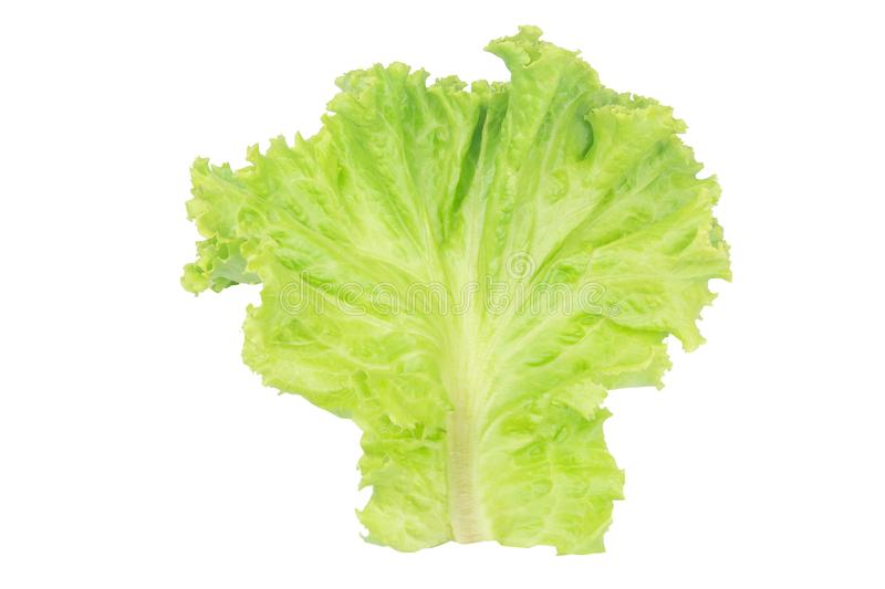 Salad leaf. Lettuce isolated on white background with clipping path royalty free stock photos