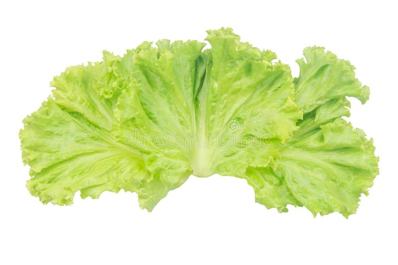 Salad leaf. Lettuce isolated on white background with clipping path royalty free stock photography