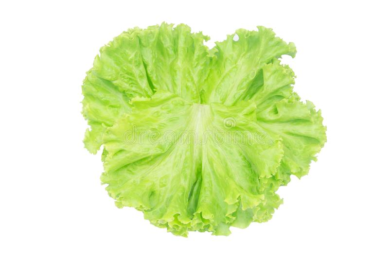 Salad leaf. Lettuce isolated on white background with clipping path royalty free stock photo