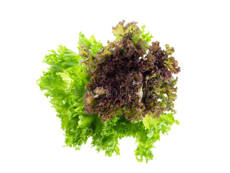 Salad leaf. Lettuce isolated on white background, Fresh and green lettuce, Salad background for inserting text royalty free stock images