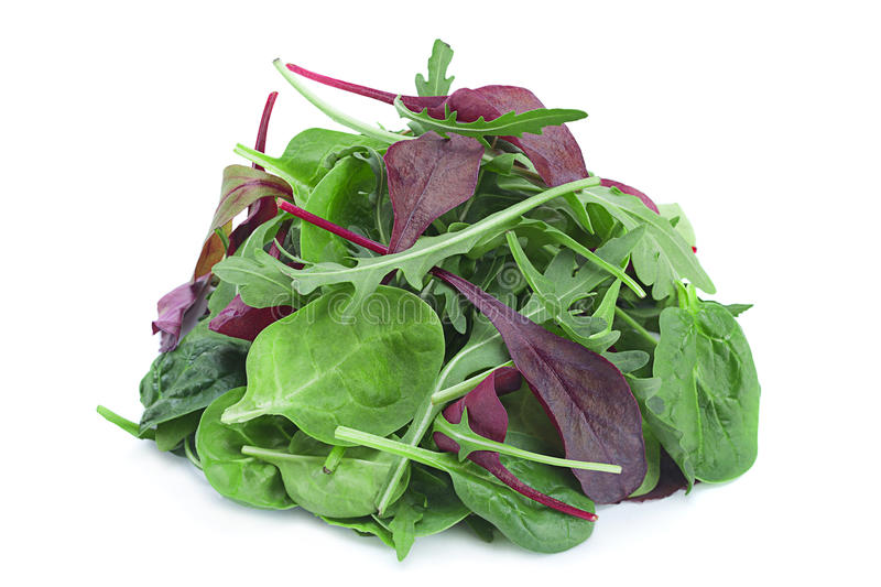 Salad leaf mix royalty free stock photos