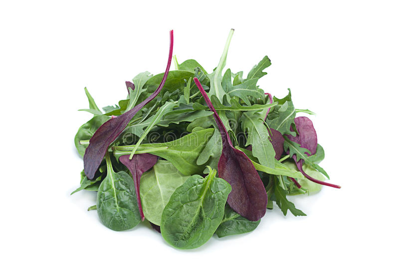 Salad leaf mix royalty free stock images