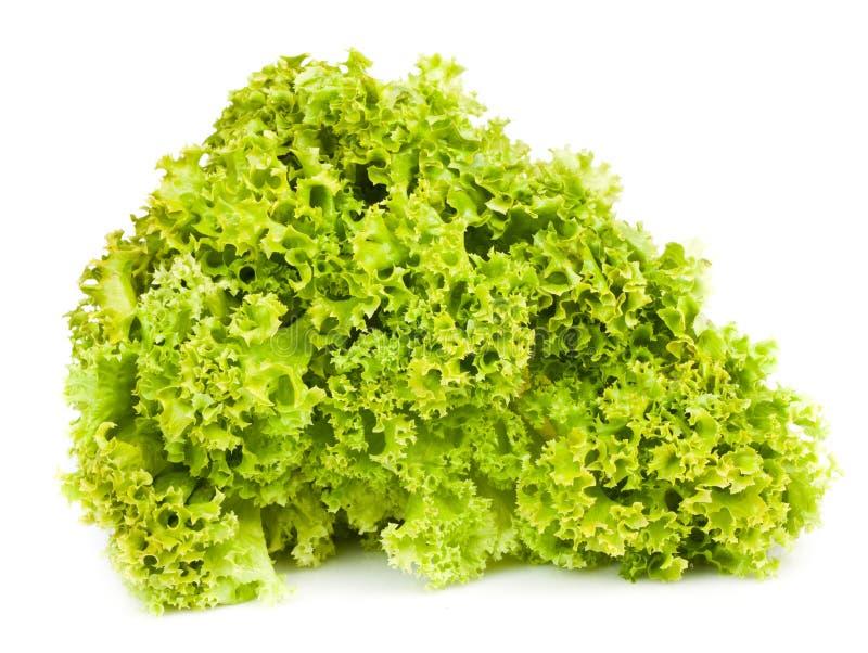 Download Salad leaves stock image. Image of vegetable, salad, freshness - 19868933