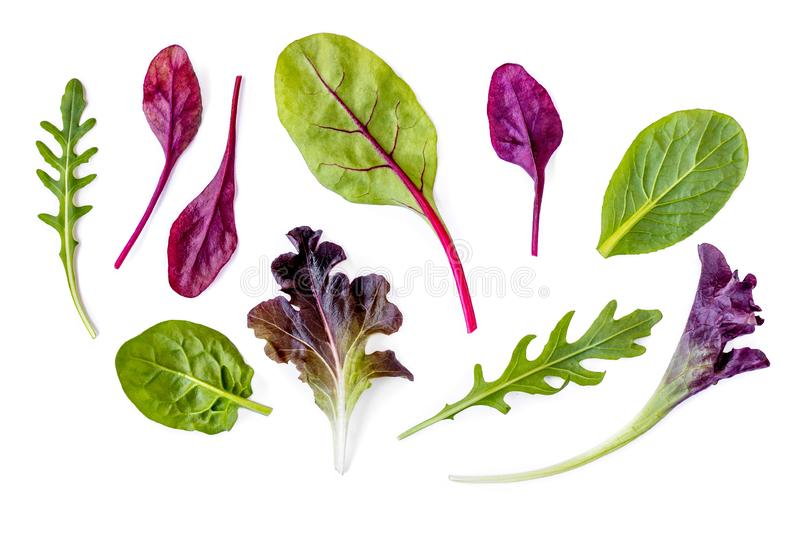 Salad leaves Collection. Isolated Mixed Salad leaves with Spinach, Chard, lettuce, rucola on white background. Flat lay royalty free stock photography