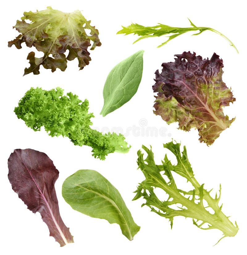 Download Salad Leaves Collection stock photo. Image of leaf, purple - 39508116