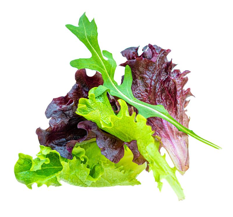 Salad leaves Isolated.  Mixed Salad leaves with Spinach, Chard, lettuce, rucola on white background. Close up royalty free stock photography