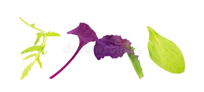Salad Leaves Mix Rucola Purple Lettuce Spinach Chard Blad på vit bakgrund royaltyfri fotografi