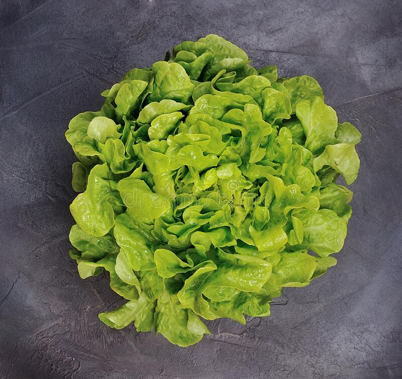 Salad lettuce . stock photos