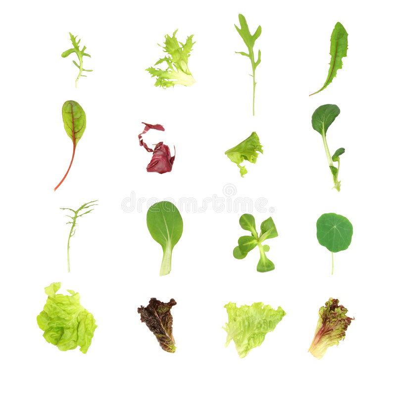 Salad Lettuce Leaf Selection. Over white background royalty free stock photos