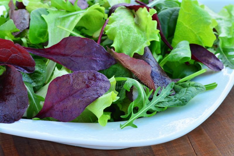 Salad of mixed greens, mesclun, arugula, lettuce. Salad of mixed greens, mesclun, arugula, mache, lettuce, tender leaf vegetables in plate over wooden table stock images
