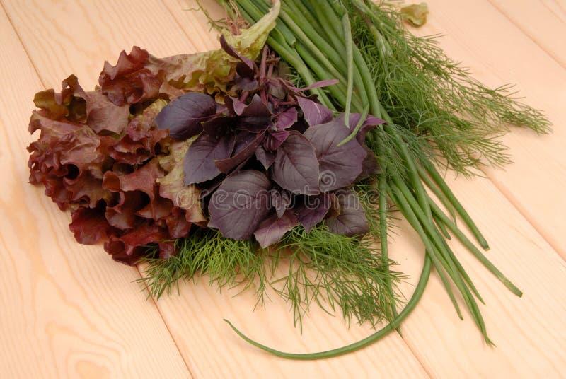 Salada, aneto, manjericão, cebolas da mola, foto de stock royalty free