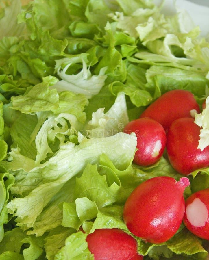 Salada da alface e do Radish fotos de stock