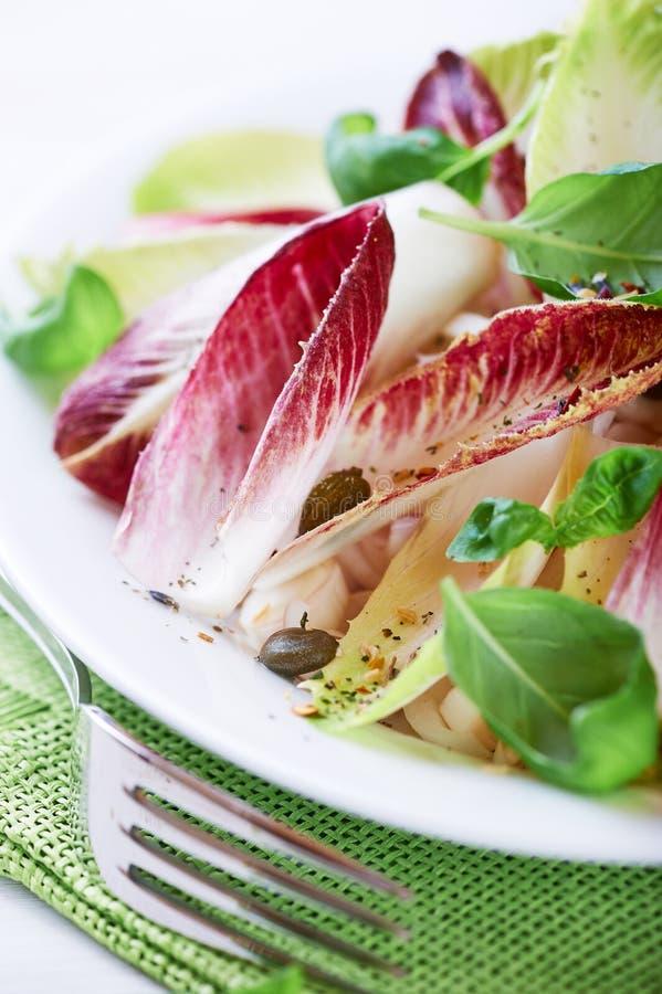 Salada da chicória foto de stock