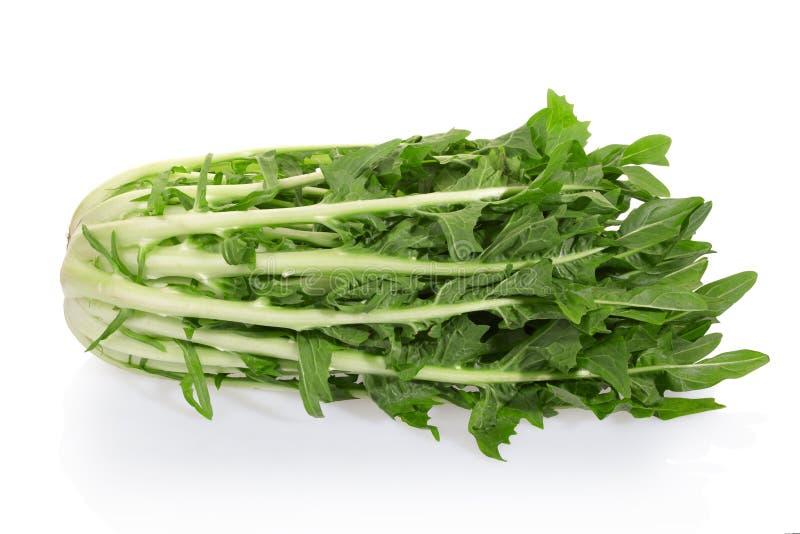 Salada da chicória foto de stock royalty free
