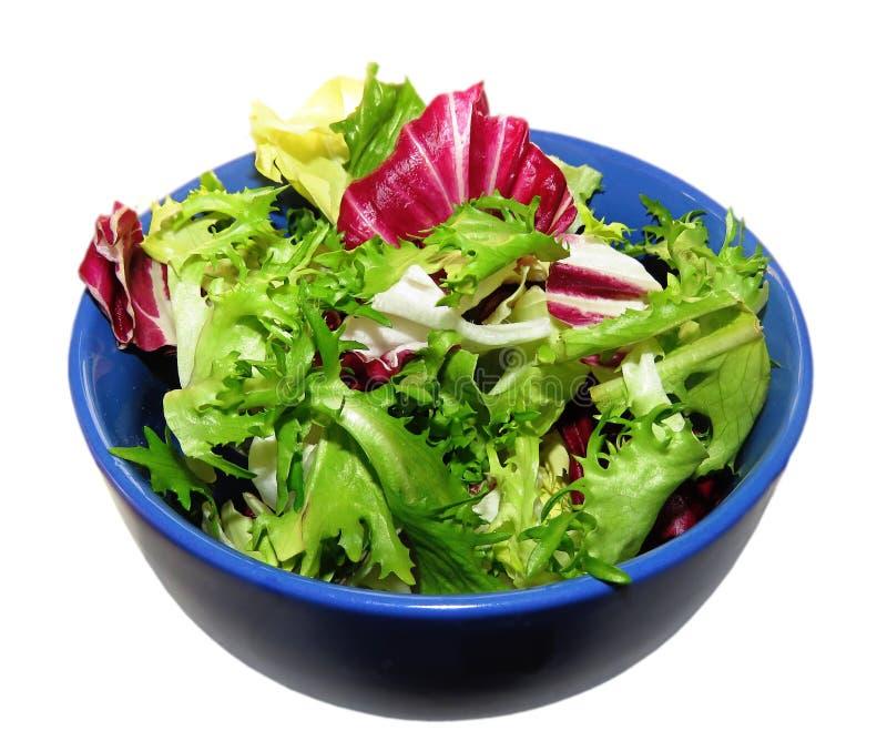 Salada da chicória, do radicchio e da endívia fotografia de stock
