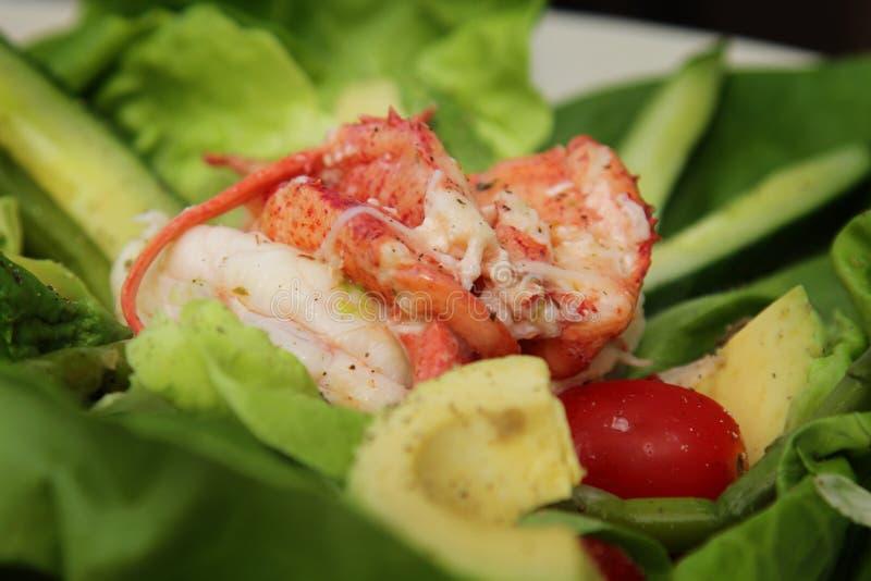 Salada da lagosta fotos de stock royalty free