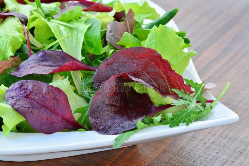 Salada da mola de close up misturado dos verdes imagens de stock