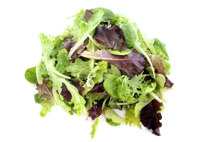 Salada de Mesclun imagem de stock