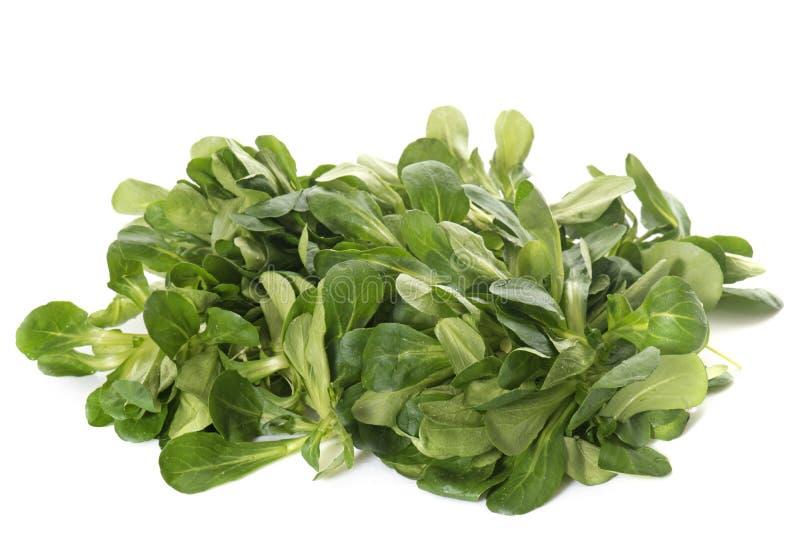 Salada de milho fresca foto de stock