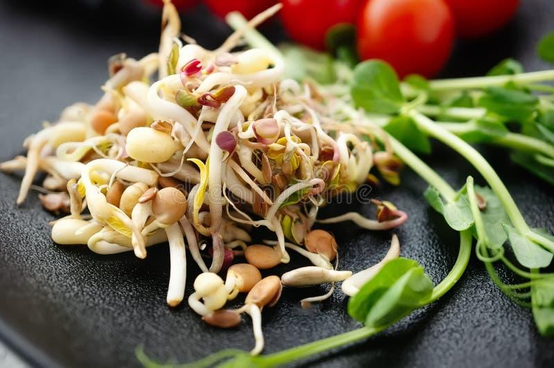 Salada de sementes e do linho brotados do feijão com abacate O conceito do alimento macrobiótico fotografia de stock