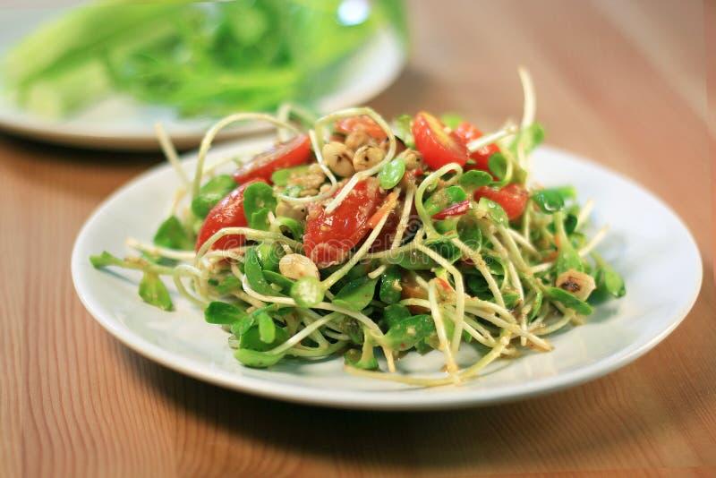 Salada do broto do girassol com fonte especial fotos de stock