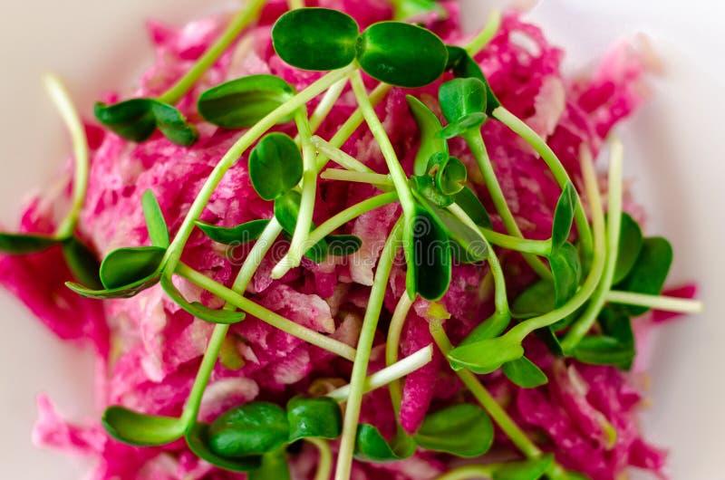 Salada do rabanete vermelho e de brotos frescos do girassol fotografia de stock royalty free