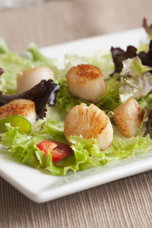 Salada do Scallop e da folha foto de stock