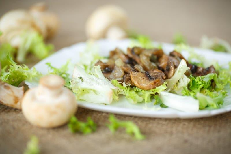 Salada morna com cogumelos imagens de stock royalty free