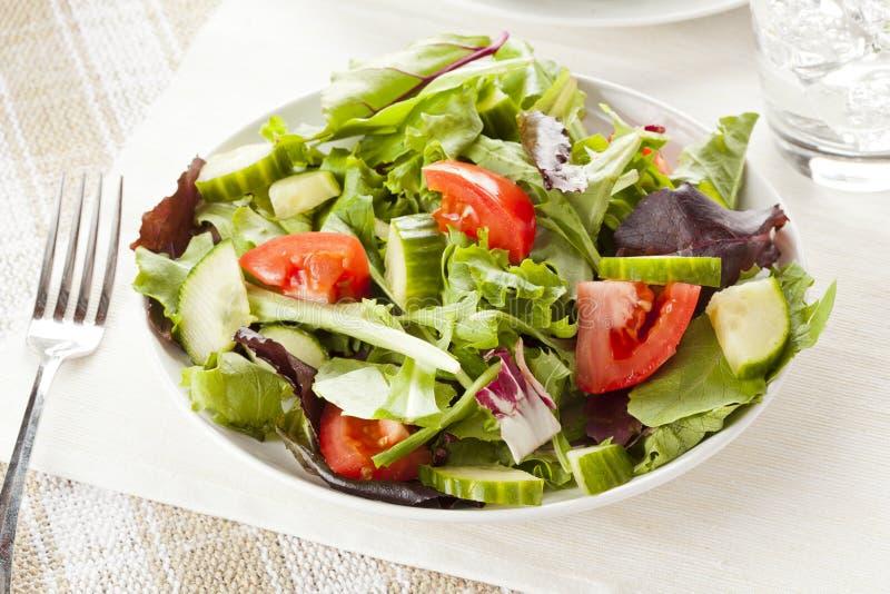 Salada orgânica verde fresca do jardim foto de stock royalty free