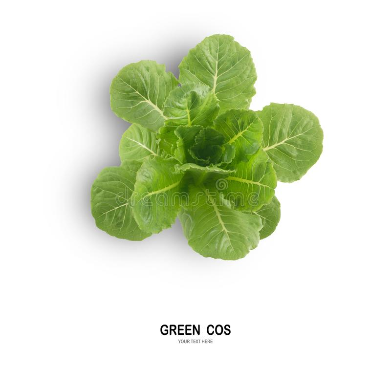 Salada VERDE da folha de COS isolada no fundo branco foto de stock