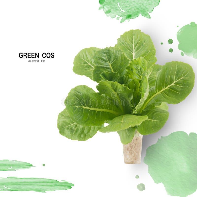 Salada VERDE da folha de COS isolada no fundo branco imagens de stock