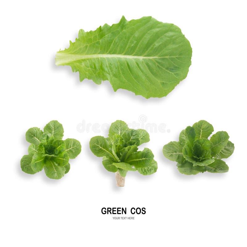 Salada VERDE da folha de COS isolada no fundo branco fotografia de stock royalty free
