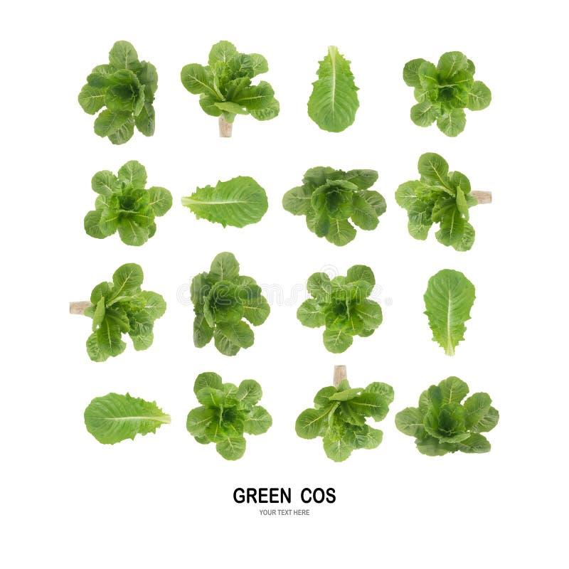 Salada VERDE da folha de COS isolada no fundo branco fotos de stock