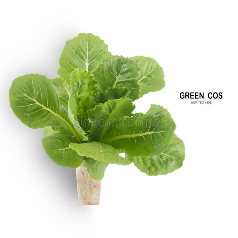 Salada VERDE da folha de COS isolada no fundo branco fotos de stock royalty free
