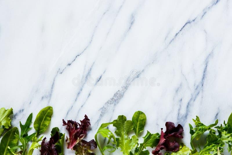 Salada verde das ervas imagens de stock