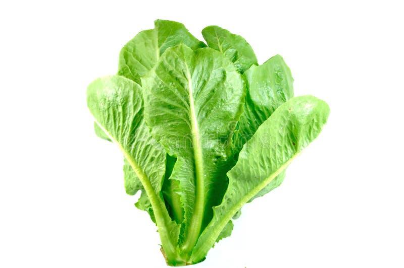 Salada verde de cos foto de stock royalty free