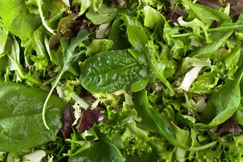 Salada verde fresca com espinafres, rúcula e alface imagens de stock
