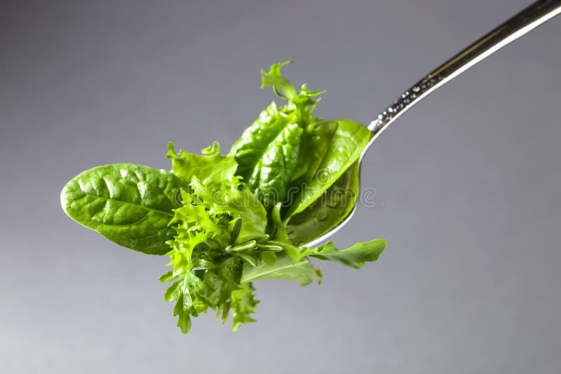 Salada verde fresca com espinafres, r?cula e alface imagens de stock royalty free